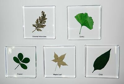 5 Plant Leaf Specimen Box Set C in Clear Square Block Education Kit SSDD74S9