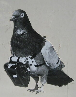 Pigeon With Camera 1903 Germany 5x4 Inch Reprint Photo
