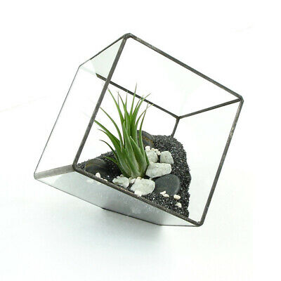 1X Glass Geometric Terrarium Box Tabletop Succulent Planter Flower Pot Fern/Moss