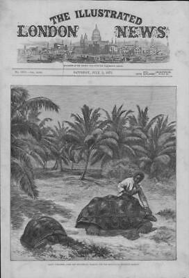 1875 Antique Print - AFRICA Seychelles Islands Giant Tortoises Zoological (108)