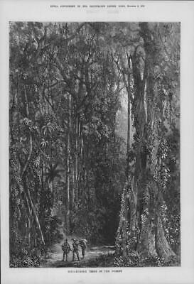 1875 Antique Print - INDIA Rubber Trees Forest Man Bow Vines Palms (209)