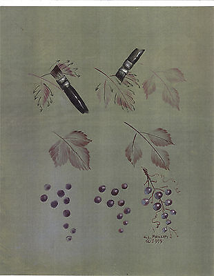 Shawdow Leaves & Grapes Step by Step Worksheet by Carolyn L. Phillips