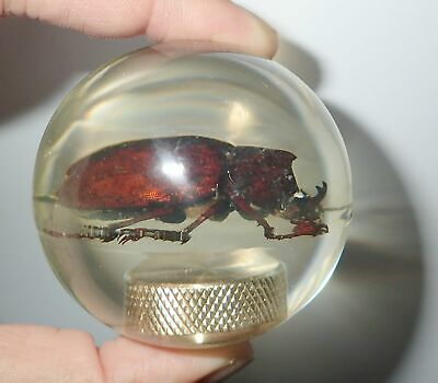Unicorn Beetle Specimen 60 mm Sphere Ball Vechicle Shift Knob Clear