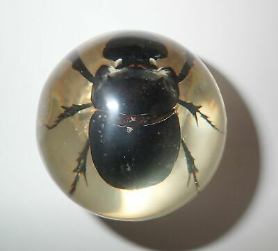 Dung Beetle Liatongus gagatinus 60 mm Sphere Ball Vechicle Shift Knob Clear