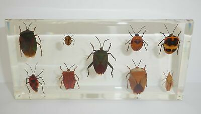 9 Bug Collection Set in Amber clear Block Education Different Insects Specimen