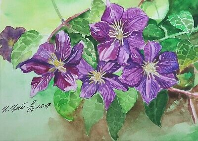 ACEO Clematis Flowers Original Watercolor Painting Botanical illustration