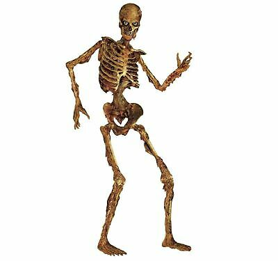 Halloween Jointed Skeleton 6 ft Life Size  PROP Haunted House Decoration