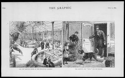1883 Antique Print - LONDON Zoological Gardens Reptile House DOG Railway (19)