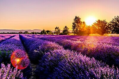 Digital Picture Image Photo Wallpaper JPG Sunset Desktop Screensaver Lavender