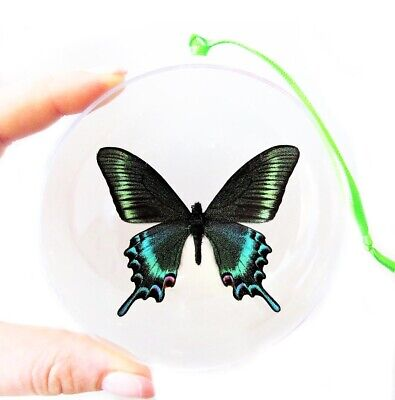 Real Butterfly Blue Green Papilio Maacki Swallowtail Christmas Ornament Gift