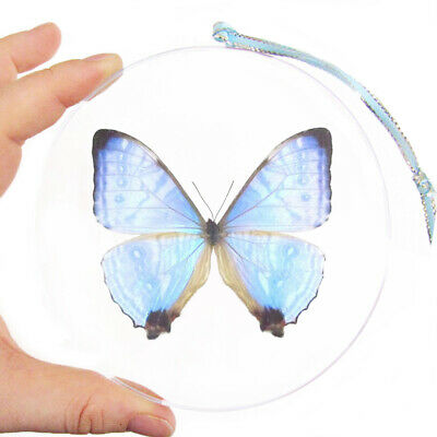 Real Butterfly Blue Pink Purple Morpho Sulkowski Christmas Ornament Gift Peru