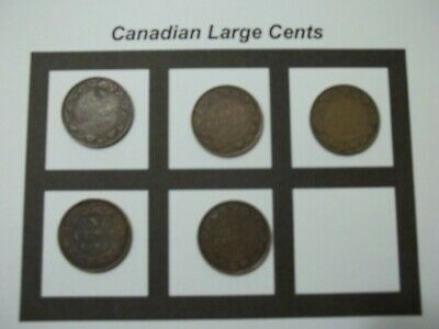 5 Canadian Large Cents 5 Coins  (CLC3)