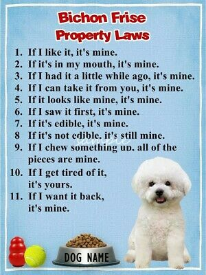 BICHON FRISE Property Laws Magnet Personalized With Your Dog's Name