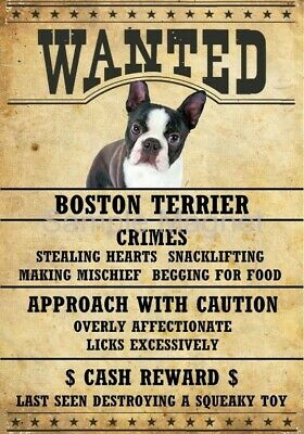 "BOSTON TERRIER Wanted Poster Fridge Dog Magnet LARGE 3.5"" X 5"""