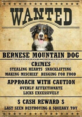 "BERNESE MOUNTAIN DOG Wanted Poster Fridge Dog Magnet LARGE 3.5"" X 5""  #2"