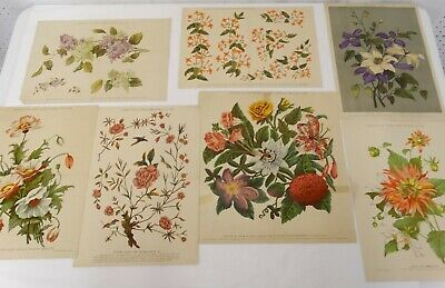 Antique Color Litho Floral Print Pattern Lot of 7 Embroidery Painting Designs