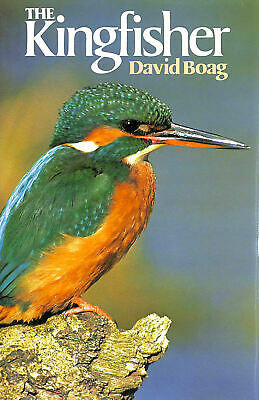 The Kingfisher by Boag, David