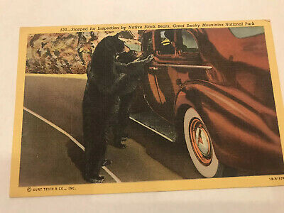 Smokey Mtn. N.P. Bear & Car. Linen Postcard