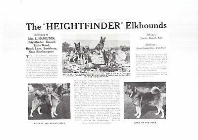 Norweigan Elkhound breed kennel clippings hound  breed x 50 dog crufts lot 1
