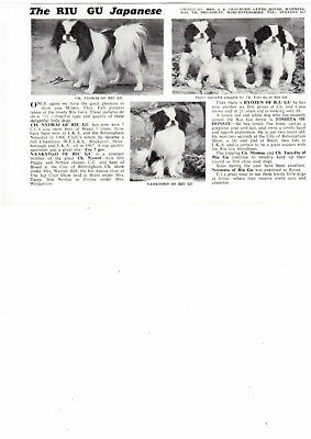 Japanese chin  breed kennel clippings pedigree crufts x 50 lot 3 dog showing