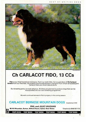 Bernese mountain dog working breed kennel clippings pedigree crufts x 100 lot 1