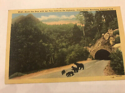 Smokey Mtn. N.P. Black Bears Linen Postcard