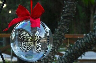 Real Butterfly Christmas Ornament Gift Usa