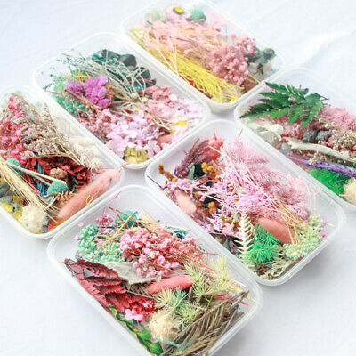 1Box Real Dried Leaf Flowers Plant Herbarium Craft Jewelry Making Casting Gift