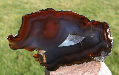 SiS: DARK & GLASSY 3/4 lb.  Piranha Fortification Agate - LIQUID Polish!