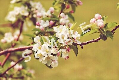 Photo, spring, wallpaper digital picture - High resolution good for printing