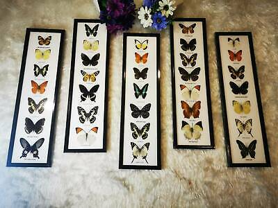 5x Real 7 Mix Beautiful BUTTERFLY Taxidermy Insect DisplayFrame Wall Mount Decor