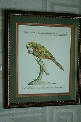 "Saverio Manetti 1767-1776 /""Yellow-crested Cockatoo/"" — Giclee Fine Art Print"