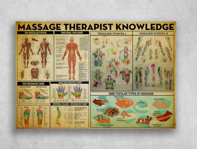 Massage Therapist Knowledge The Muscular System Foot Reflexology Poster No Frame