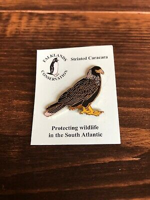 Striated Caracara Pin Badge Not RSPB Badge But Falklands Conservation! Beautiful