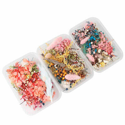 Dried Real Flowers 1 Box Plants For Aromatherapy Jewelry Epoxy Resin Making Art