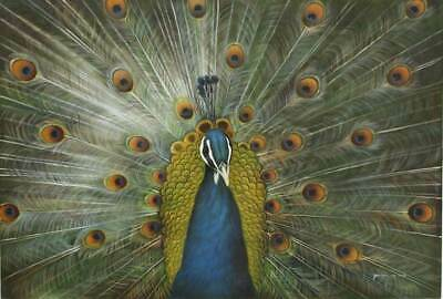 CHOP181  hand-painted  peacock  spread its tail oil painting bird art on canvas