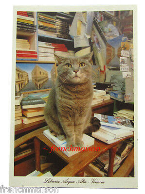 Italian Cat Postcard Famous LIBRERIA ACQUA ALTA Venice MOST BEAUTIFUL BOOKSTORE