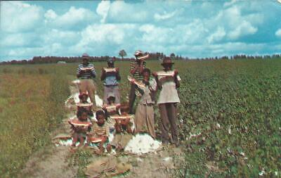 TIME OUT FOR WATERMELON DOWN SOUTH Older Postcard Black Americana