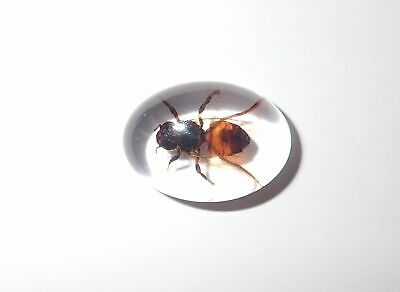 Insect Cabochon Honey Bee Apis mellifera Oval 18x25 mm Clear 1 piece Lot