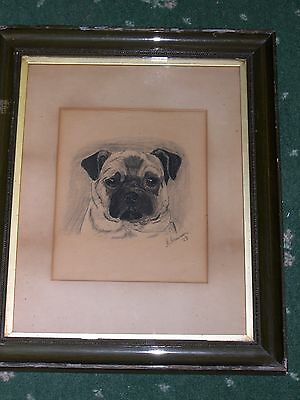 Large Antique Pug Dog Pastel / Charcoal Painting Signed Dated 1903 Pugs