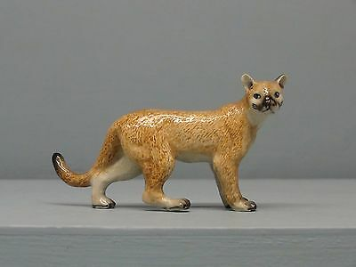 Cute Northern Rose Cougar Walking
