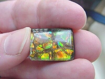 (J478) Red Green snakeskin pattern Ammolite fossil shell loose cabochon jewelry