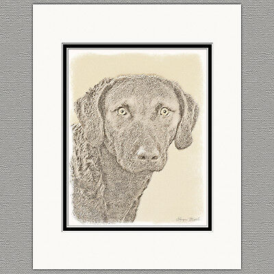 Chesapeake Bay Retriever Original Print 8x10 Matted to 11x14