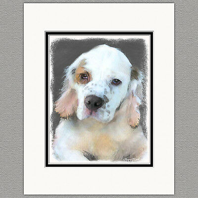 Clumber Spaniel Dog Original Art Print 8x10 Matted to 11x14