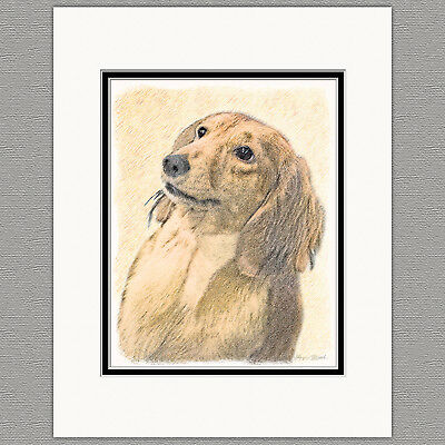 Dachshund Longhaired Red Original Art Print 8x10 Matted to 11x14