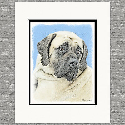 English Mastiff Dog Fawn Original Art Print 8x10 Matted to 11x14