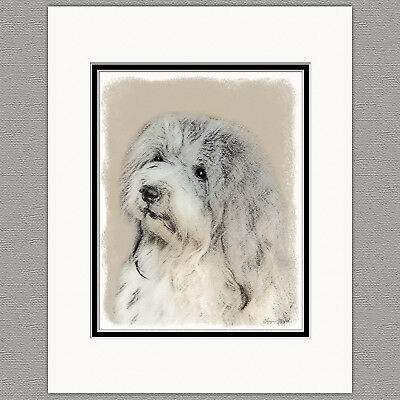 Havanese Dog Original Art Print 8x10 Matted to 11x14