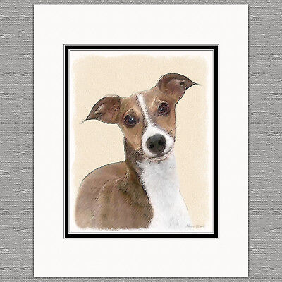 Italian Greyhound Dog Original Art Print 8x10 Matted to 11x14