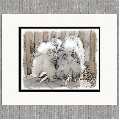 Keeshond Butts at the Gate Original Print 8x10 Matted to 11x14