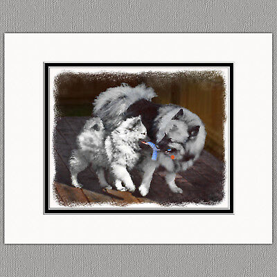 Keeshond Playtime Original Art Print 8x10 Matted to 11x14